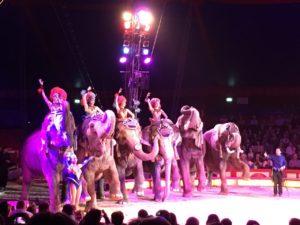 Elefanten - Nicht nur in Indien